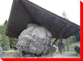 World's Largest Burl - Port McNeil, British Columbia