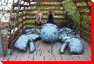 Lobster in Trap - Auld's Cove, Nova Scotia
