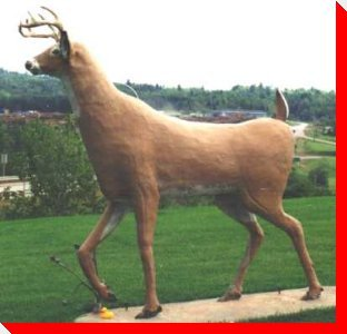 Deer - Plaster Rock, New Brunswick