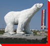 Polar Bear - Churchill, Manitoba