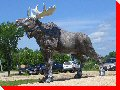 Moose - Riverton, Manitoba