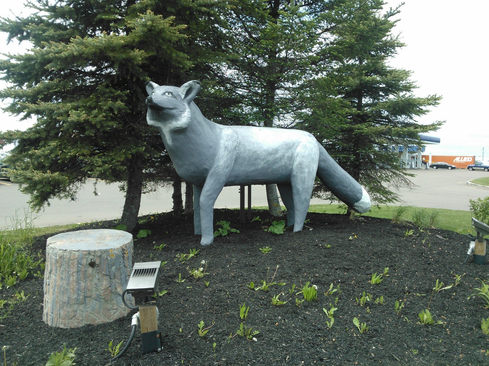 World's Largest Silver Fox - Salisbury, New Brunswick