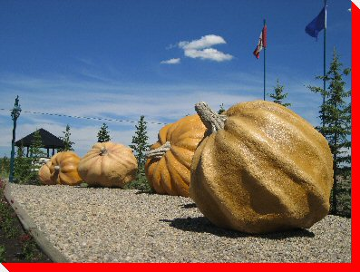 Pumpkins - Smoky Lake, Alberta